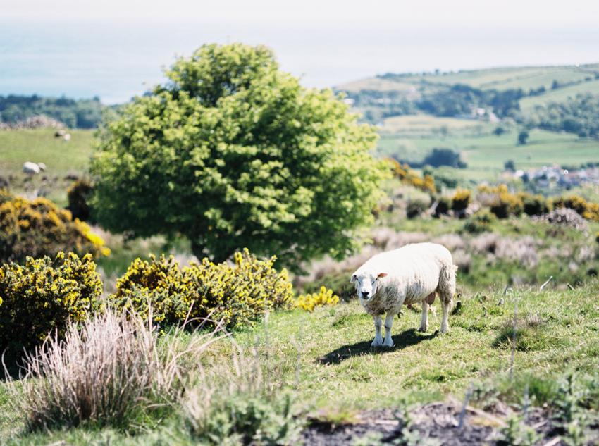 Ireland_037